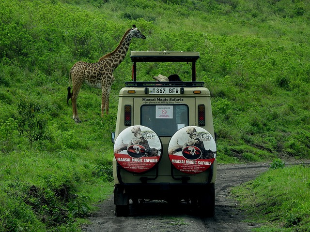 Things to Do Before Going to a Safari Adventure