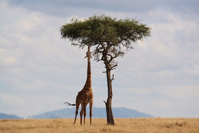 Myths in Traveling to Africa